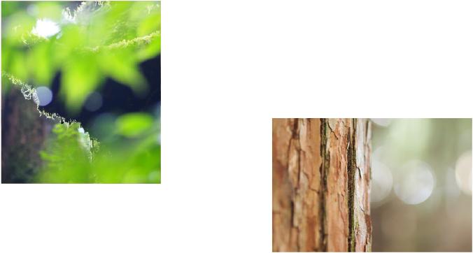 自然のイメージ画像